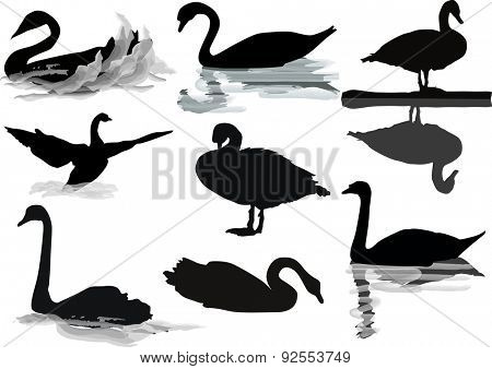 illustration with swans collection isolated on white background