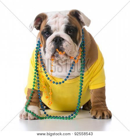 female dog - bulldog wearing yellow shirt with colorful beads on white background - 3 months old