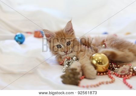 Cat Maine Coon Kitten Lying And Playing With Christmas Decoration
