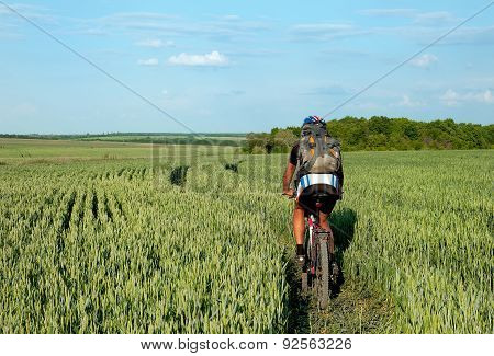Cyclist Riding On A Field Of Green Wheat