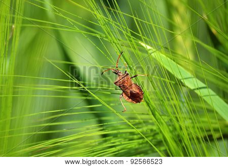 The insect on the plant