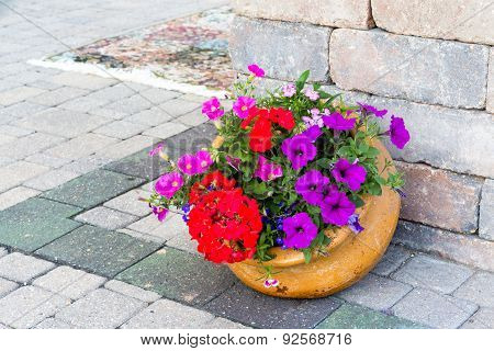 Ornamental Display Of Colorful Flowers