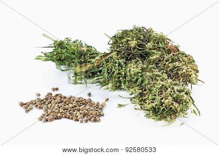 Hemp Seeds And Dried Cannabis Twigs