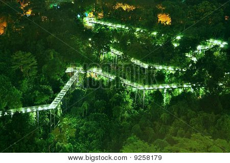 long and winding forest walkway by night