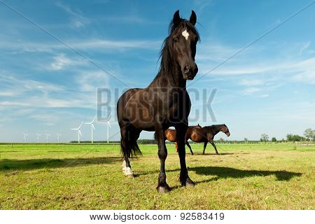 picture of young Hanoverian horse