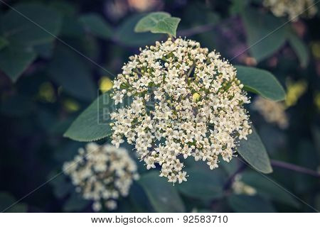 Bunch Of White Flowers With A Digital Retro Effect