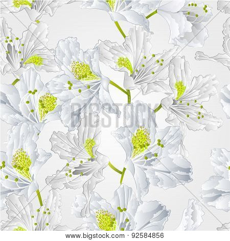 Seamless Texture White Rhododendron  Vector