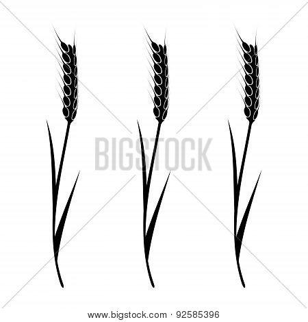 Wheat Element