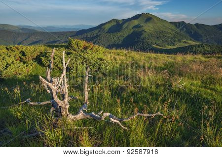 Beauty summer day in the Carpathian mountains with submerged stump and green grass. Marmarosu ridge, Ukraine, Europe.