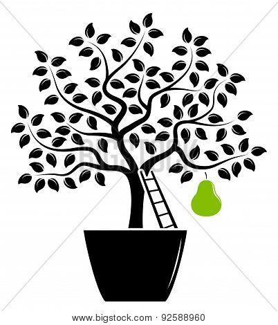 Pear Tree In Pot