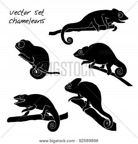 Set of chameleon. Reptiles vector illustration