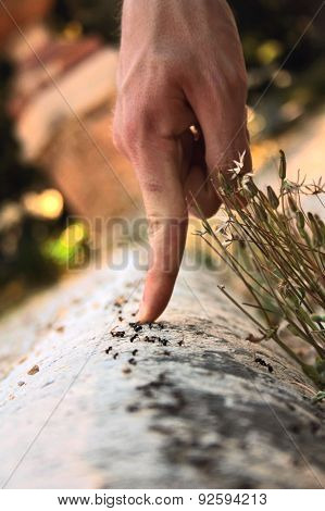 hand with ants