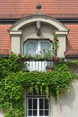 picture of ivy vine  - Climbing Vines of Ivy on a House with Horse Head and Flowers - JPG