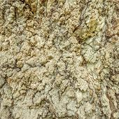 picture of redwood forest  - Texture of the old tree in the deep forest - JPG