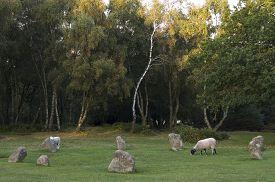 image of saracen  - Nine Ladies Stone Circle Stanton Moor Derbyshire UK - JPG
