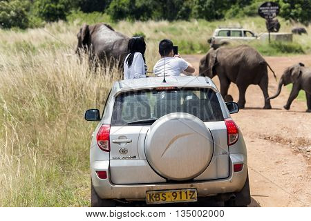 AFRICA, TANZANIA, MAY, 06, 2016 - Visitors on jeep shoot  wild elephants crossing the road  in Tarangire National Park, Tanzania.