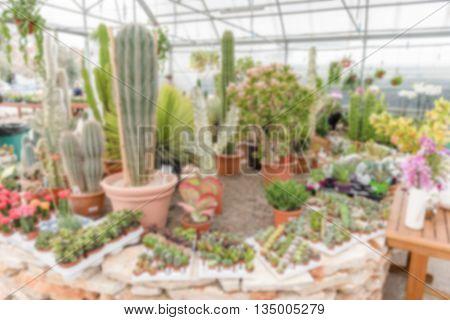 Defocused Background Of Succulent Plants Inside A Greenhouse