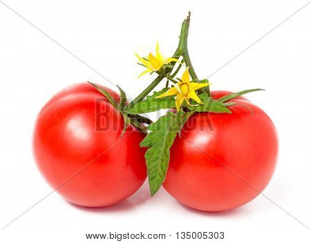 branch of two tomato leaves and yellow flower isolated on white background