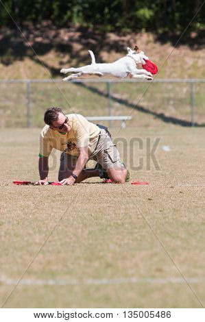 SNELLVILLE, GA - MAY 14 2016:  A dog leaps over his trainer to catch a frisbee tossed in the air in a dog frisbee catching exhibition at Pawfest a dog festival in Snellville GA on May 14 2016.