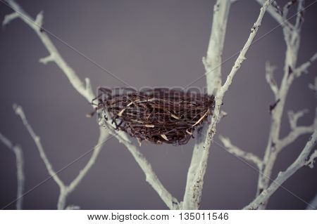 Bird nest on a tree branches in studio