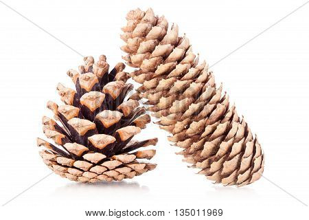 two pinecones isolated on a white background