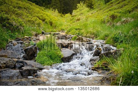 Crystal clear river originates in the forest, and flows through a green meadow.