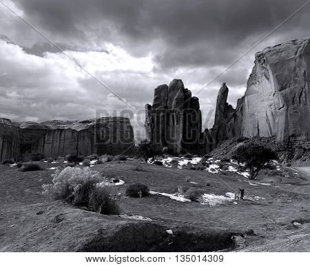 Dog at Monument Valley Arizona with stormy cloudy skies blank and white