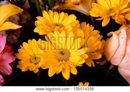 Daisy Floral arrangement isolated over a black background