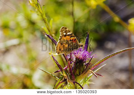 Insects feeding on the nectar of flowers inside