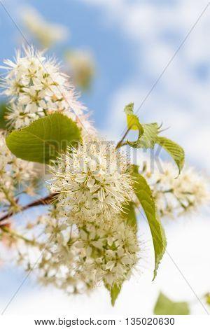 beautiful tender spring blooming tree. toned image
