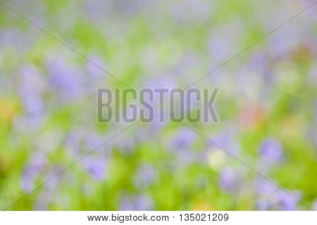 in the forest you have trees and bluebells on the ground in spring time