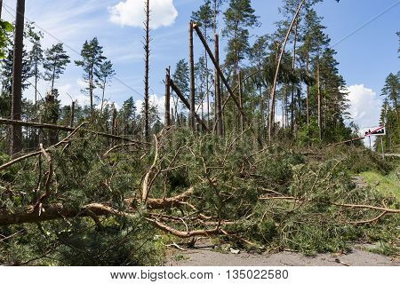 Broken trees blocking the road after the hurricane winds destroyed in a roadside forest
