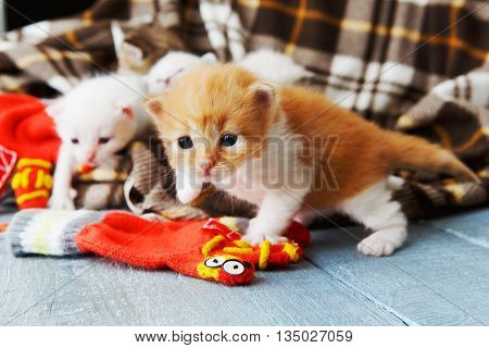 Kitten and mittens. Ginger orange newborn kitten near a plaid blanket.