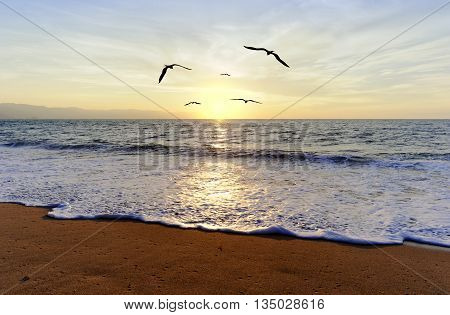 Ocean sunset birds is five silhouetted birds flying towards the light of the setting sun.