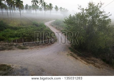 Country road is a winding fence lined country road in the early mist of the morning.