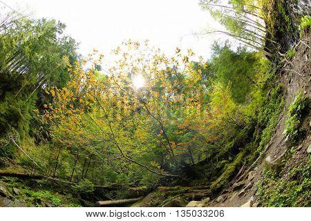 Picturesque Carpathian landscapes