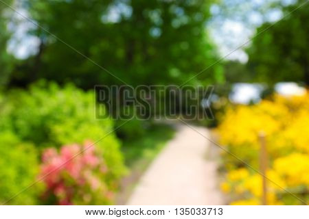 Footpath between flower beds with bright colourful flowers in botanical garden, unfocused