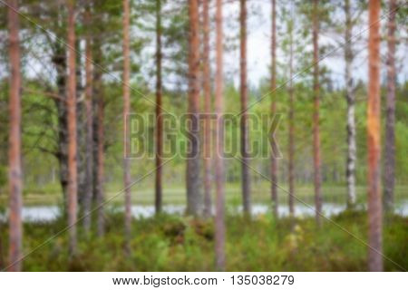 Finnish taiga landscape in summer intentionally blurred