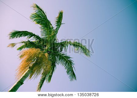 Palm tree against sky low angle point of view retro style color tones