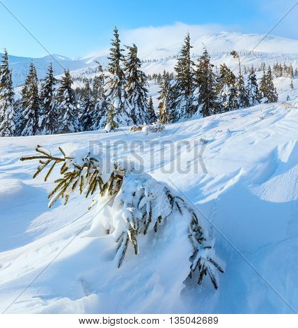 Morning Winter Mountain Landscape (carpathian).