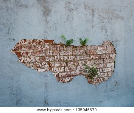 Plaster wall with exposed bricks and ferns growing