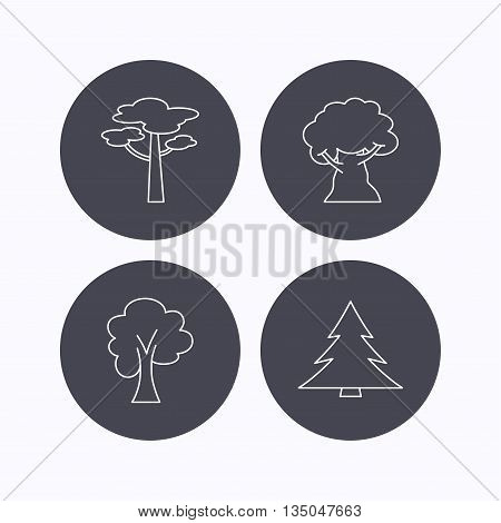 Pine tree, maple and oak-tree icons. Forest trees linear signs. Flat icons in circle buttons on white background. Vector