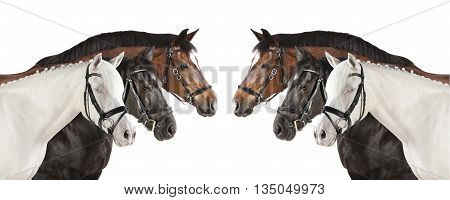 Horses White Collage