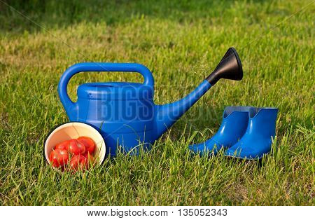 Blue rubber boots and watering can on a background of green lawn. Harvest ripe red tomatoes in a bowl. Bright gardener tools for garden care.