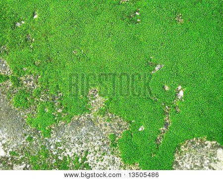 moss texture top view