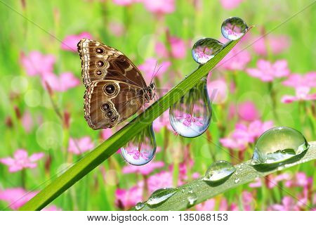 Fresh green grass with dew drops and butterfly closeup. Nature Background.