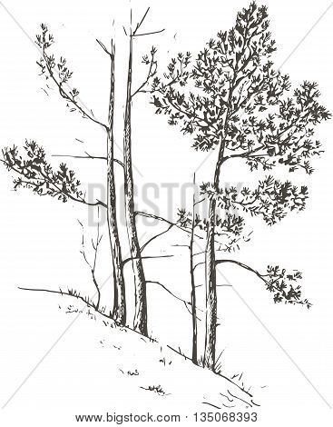 pine trees and grass at hill drawing by ink, sketch of wild nature, forest sketch, hand drawn vector illustration