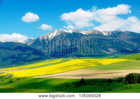 Beautiful landscape green and yellow meadow with field and snow mountain. Slovakia Central Europe Liptov. Mountain High Tatry