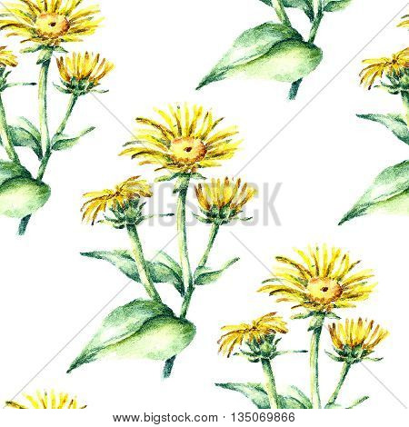 Hand drawn watercolor botanical illustration of the elecampane plant. Elecampane drawing isolated on the white background. Medical herbs illustration, herbarium. seamless pattern. vector