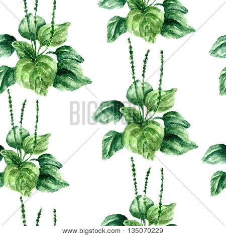 Hand drawn watercolor botanical illustration of the plantain plant. Plantain drawing isolated on the white background. Medical herbs illustration, herbarium. seamless pattern. vector
